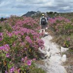 Table Mountain hiking – Hoerikwaggo Trail