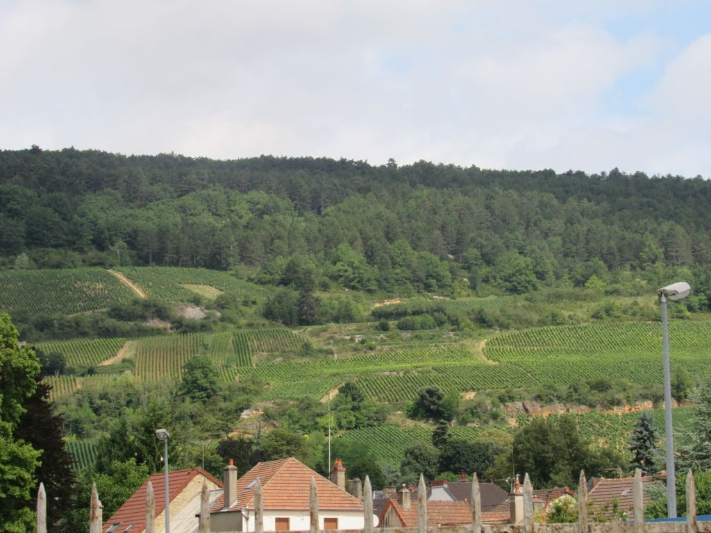 Santenay vineyards