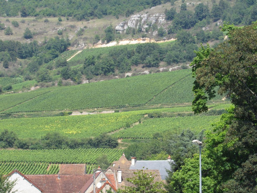 Vineyards in Santenay